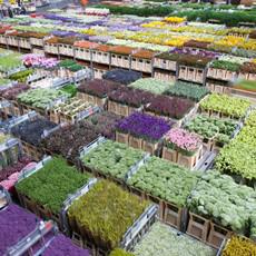 Nieuwe logistieke concepten voor sierteeltsector