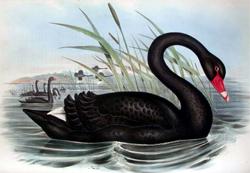 Bent u klaar voor de zwarte zwaan?