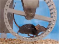 Zorglogistiek: inhaalrace of ratrace?