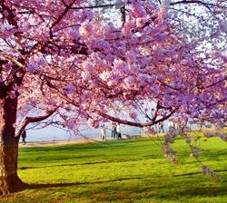 Eindelijk lente!