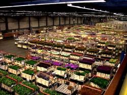 Vrouwendag stuwt vraag naar bloemen Aalsmeer