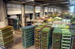 FloraHolland breidt uit in Venlo