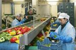 Arbeidsinspectie neemt AGF-sector onder de loep