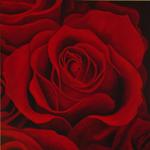 100 miljoen rozen voor Valentijn bij FloraHolland