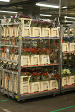 FloraHolland neemt Plan Rijnsburg in gebruik