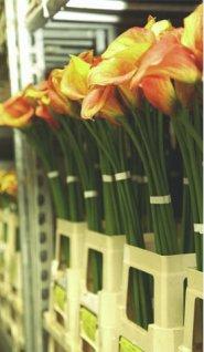 Floraholland Naaldwijk bespaart op personeelskosten