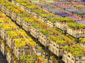 Export bloemen en planten stabiel