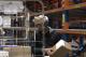 Coop-medewerkers: minder woorden om orders te verzamelen