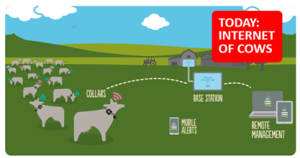 internet of cows