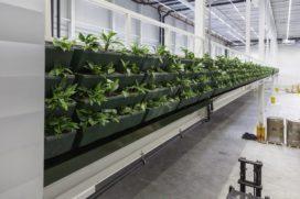 Prologis heeft primeur met eerste WELL-certificaat voor distributiecentrum