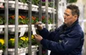 Platform stimuleert ketensamenwerking in Noord-Limburgse sierteelt