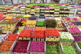 Gympen en badslippers: veiligheid bloemenexporteur schiet ernstig tekort