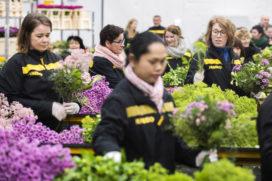 Jumbo opent nieuw distributiecentrum voor bloemen