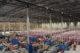 Bleckmann bouwt dc in Gent voor grote e-commerce klant